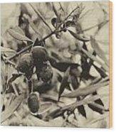 Nazareth Olives Israel Antiqued Wood Print