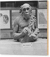 Neanderthal Museum Display, 1924 Wood Print
