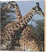 Necking Giraffes Wood Print