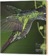 Nectar Feeding Hummingbird Wood Print