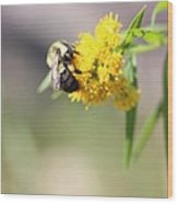 Nectar Wood Print by Marie-Claude Charron