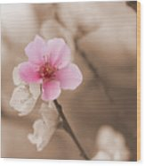 Nectarine Flower Blooming Wood Print