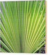 Needle Palm Wood Print