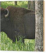 Needs A Bigger Hiding Spot Wood Print by Charles Kozierok