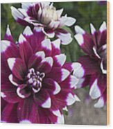 Neighbors Garden Treasures Wood Print