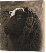 Nellah The Shetland Sheep  Wood Print