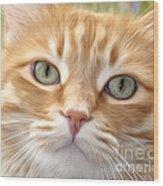 Yellow Cat Digital Art Wood Print