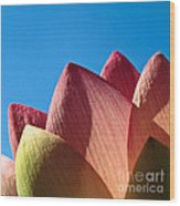 Nelumbo Nucifera Wood Print