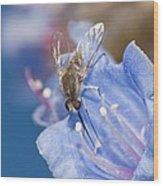 Nemestrinid Fly Feeding Wood Print