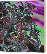Neon Coleus Wood Print