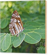 Neptis Hylas / Common Sailer Butterfly Wood Print