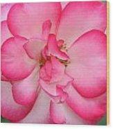 Neptune Hybrid Tea Rose Wood Print