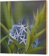 Nest Of Blue Stars Wood Print