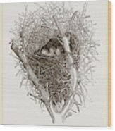 Nest Of Magpie Wood Print