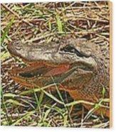 Nesting Alligator Wood Print