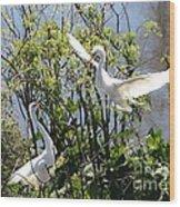 Nesting Great Egrets Wood Print