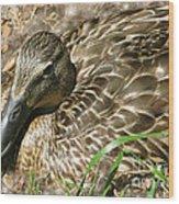Nesting Mallard Wood Print