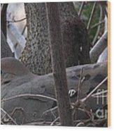 Nesting Morning Dove Wood Print