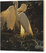 Nesting Pair Of Snowy Egrets Wood Print