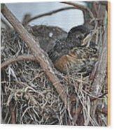 Nesting Wood Print