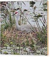 Nesting Sandhill Crane Wood Print
