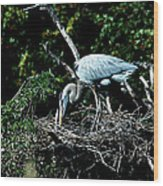 Nesting Season Wood Print