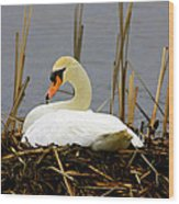 Nesting Swan Wood Print