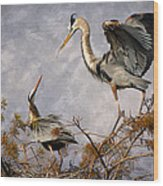Nesting Time Wood Print by Debra and Dave Vanderlaan