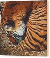 Nestled Tiger Wood Print