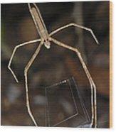 Net-casting Spider Wood Print