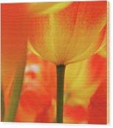 Netherlands, Macro Of Colorful Tulip Wood Print