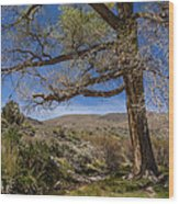 Nevada Cottonwood Wood Print