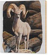 Nevada Desert Bighorn Wood Print