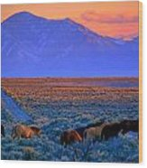 Nevada  Wood Print by Jeanne  Bencich-Nations