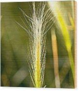 Nevada Plant Life Wood Print