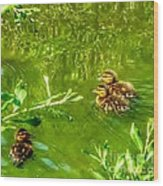 New Baby Ducklings Wood Print
