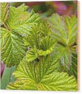 New Black Berry Leaves Wood Print