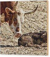 New Born Cow Calf Wood Print