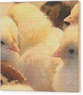 New Chicks Wood Print