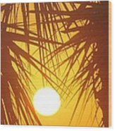 New Day In Paridise 2 Wood Print by Will Boutin Photos
