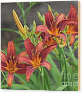 New Daylilies Wood Print