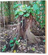 New Emerging Growth Wood Print