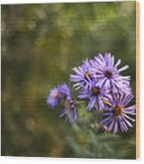 New England Asters Wood Print