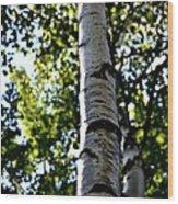 New England Birch Wood Print