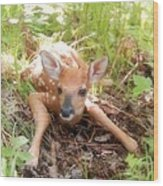 New Fawn In The Forest Wood Print