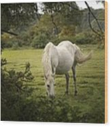 New Forest Pony Wood Print