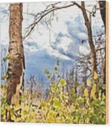 New Generation - Mixed Media - Casper Mountain - Casper Wyoming Wood Print