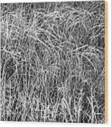 New Grasses Glacier National Park Bw Wood Print