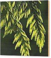 New Growth 25859 Wood Print