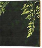 New Growth 25866 Wood Print